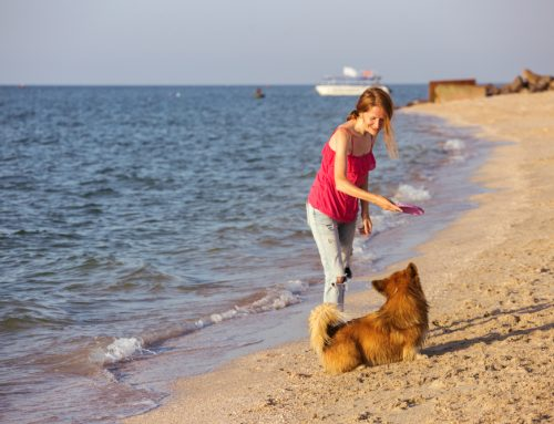 Keeping Your Pet Safe in the Summer Heat