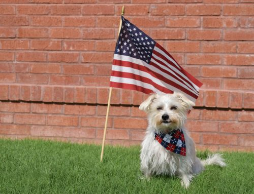 The Pet Owner's Fourth of July Safety Checklist